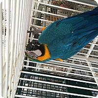 Adopt A Pet :: Tiko - Punta Gorda, FL