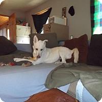 Adopt A Pet :: Pola - Quincy, IN