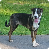 Adopt A Pet :: Taco - Rigaud, QC