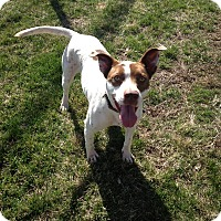Adopt A Pet :: Jazzy in CT - Manchester, CT