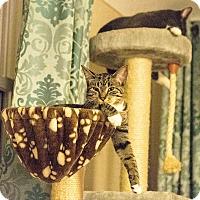 Adopt A Pet :: Seth - Wyandotte, MI