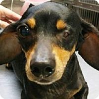Adopt A Pet :: Leonora Links - Houston, TX
