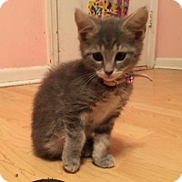 Adopt A Pet :: Anastasia - Fort Lauderdale, FL