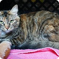 Adopt A Pet :: Missy - Mt Vernon, NY
