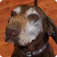 Adopt A Pet :: Pongo - Prosser, WA