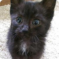 Adopt A Pet :: Phillip - Warren, OH