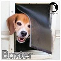 Adopt A Pet :: Baxter - Novi, MI