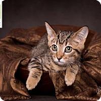 Adopt A Pet :: Daphne - Salt Lake City, UT