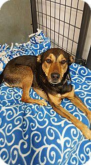 Shepherd (Unknown Type) Mix Dog for adoption in Cedar Rapids, Iowa - Chloe