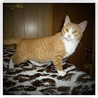 Adopt A Pet :: BARRETT - Medford, WI