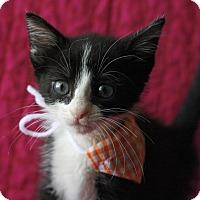 Adopt A Pet :: Sally - Mayflower, AR