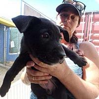 Adopt A Pet :: Foxi - Elmsford, NY