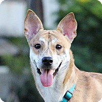 Adopt A Pet :: Aken - San Francisco, CA