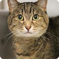 Adopt A Pet :: Athena - Walla Walla, WA