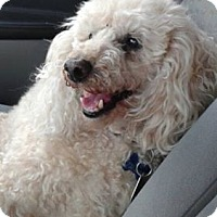 Adopt A Pet :: Sonny - Mississauga, ON