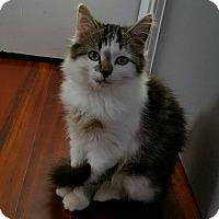 Adopt A Pet :: Chester - Monroe, NC