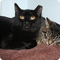 Adopt A Pet :: Stevie - Lambertville, NJ
