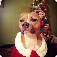 Adopt A Pet :: Sassy-Great with dogs!! - Clearfield, KY