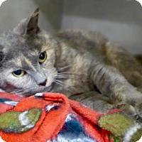 Adopt A Pet :: Lola 34166196 - Westampton, NJ