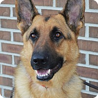 Adopt A Pet :: Fritz - Gretna, NE
