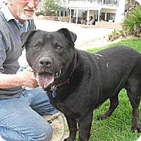 Adopt A Pet :: Ichabod - Marina del Rey, CA