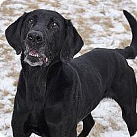 Adopt A Pet :: Buddy - Wasilla, AK