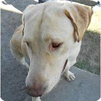 Adopt A Pet :: Danny - Lockhart, TX