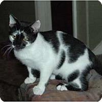 Adopt A Pet :: Candy Kidd - Chula Vista, CA