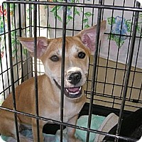 Adopt A Pet :: Sunshine - Las Vegas, NV