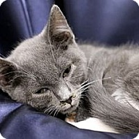 Adopt A Pet :: Freddy - Alexandria, VA