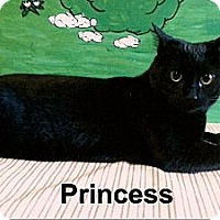Adopt A Pet :: Princess - Medway, MA