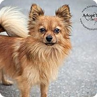 Adopt A Pet :: Grizzly - Shawnee Mission, KS