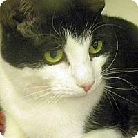 Adopt A Pet :: Kasha - Green Bay, WI
