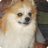Adopt A Pet :: Teddy - Salem, NH