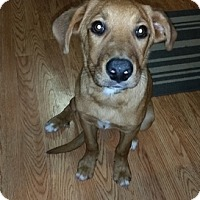 Adopt A Pet :: Artie - Evergreen, CO