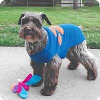 Adopt A Pet :: Moose~Adoption Pending - Sharonville, OH