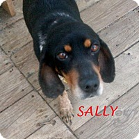 Adopt A Pet :: SALLY - Ventnor City, NJ