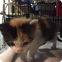 Adopt A Pet :: Lizzie - Forest Hills, NY