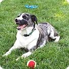 Adopt A Pet :: Jay