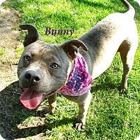 Adopt A Pet :: Bunny - El Cajon, CA