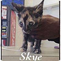 Adopt A Pet :: Skye - Dillon, SC