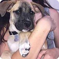 Adopt A Pet :: Riley - Durham, NC