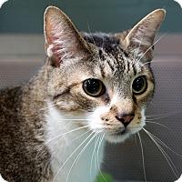 Adopt A Pet :: Mojo - Sarasota, FL