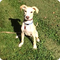 Adopt A Pet :: Casey - Lebanon, ME
