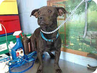 Dachshund Mix Dog for adoption in San Bernardino, California - URGENT ON 10/22 San Bernardino