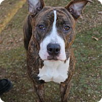 Adopt A Pet :: Casey - New Milford, CT