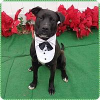 Adopt A Pet :: HANNITY see also SEAN - Marietta, GA
