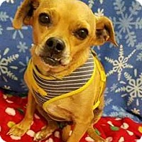 Adopt A Pet :: A Courtesy Post - Rusty - Elmsford, NY