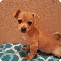 Adopt A Pet :: Lonnie - Evergreen, CO