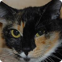 Adopt A Pet :: Samantha - Whittier, CA